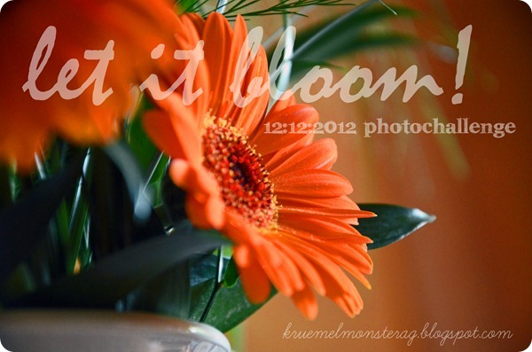 12 12 2012 photochallenge LET IT BLOOM