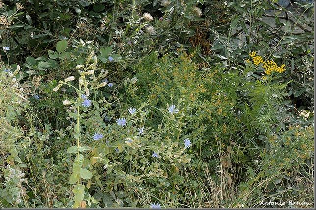 Aprendiendo con la vista insectos de jardin y de secano for Insectos del jardin