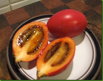 Tomate de Arvore Gigante