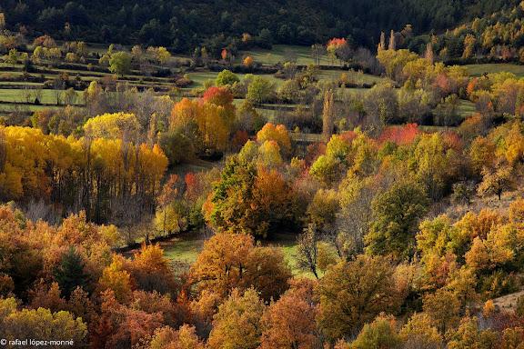 Boscos i camps conreats.Bonansa, La Ribagorca (Ribagorza), Osca (Huesca)