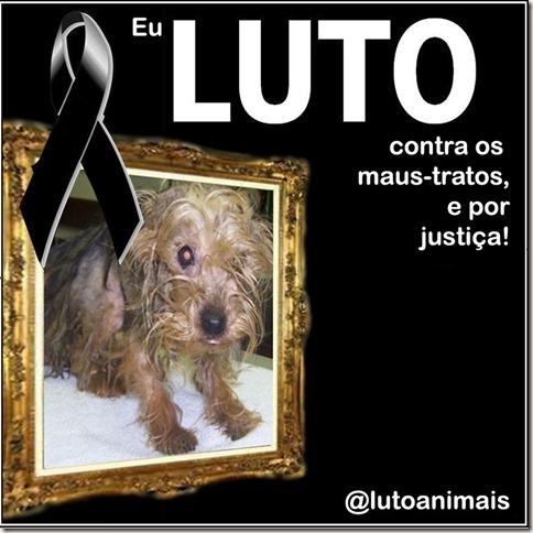 luto_animais