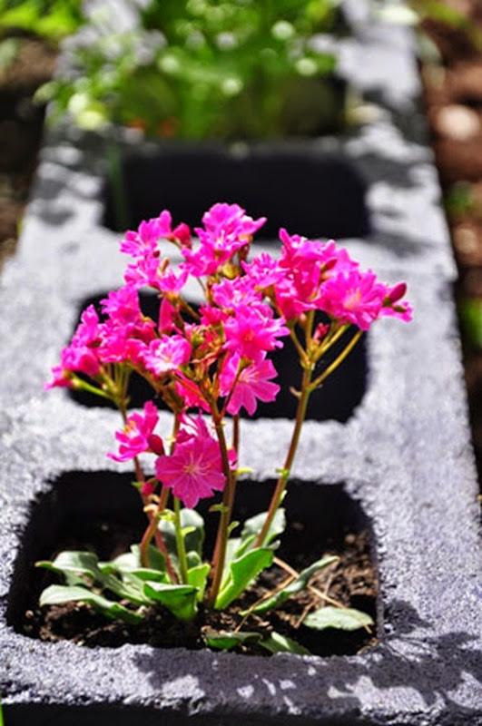 garden_unie_4