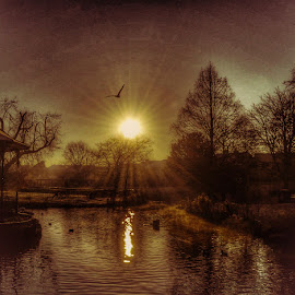 Winter Sun by Jacky Banks - Instagram & Mobile iPhone