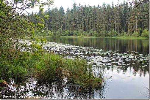 7-Dalbeattie-Loch