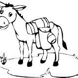 burro_10.jpg