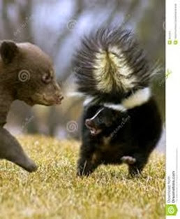 Amazing Pictures of Animals, Photo, Nature, Incredibel, Funny, Zoo, Skunks, Polecats, Mammals, Alex (16)