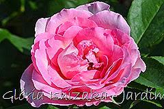 18   - Glória Ishizaka - Rosas do Jardim Botânico Nagai - Osaka