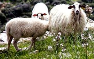 Διαμαρτύρονται οι κτηνοτρόφοι για τις εξισωτικές