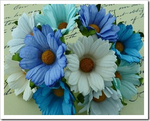 chrysantemum blue