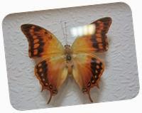 бабочки 125