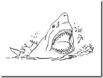 tiburon blogcolorear (2)