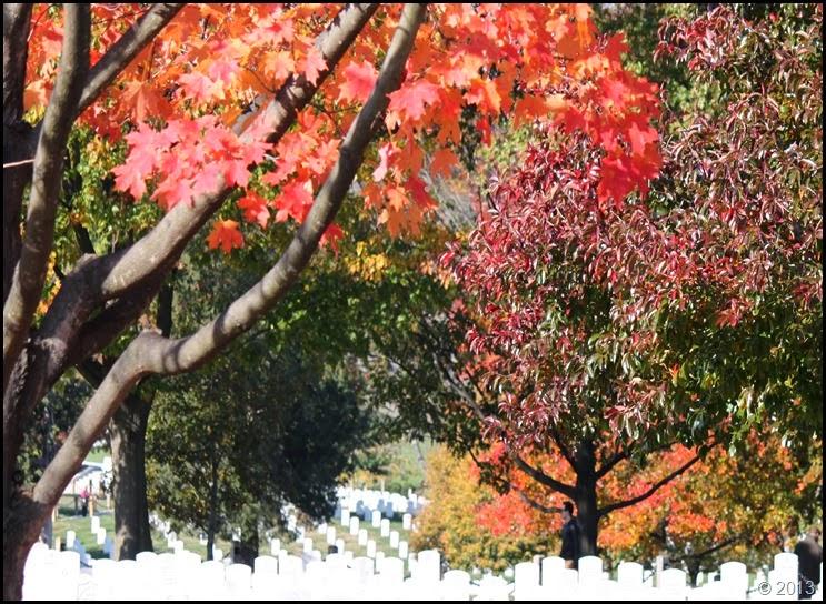 Arlington foliage 5