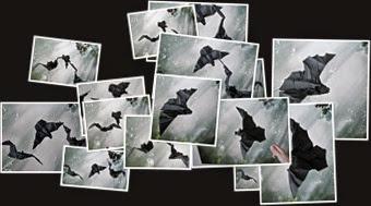 View Three Bats Plus