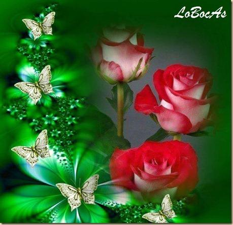 rosaroja-LoBocAS-06