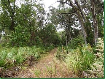 Pat's Island Trail 027