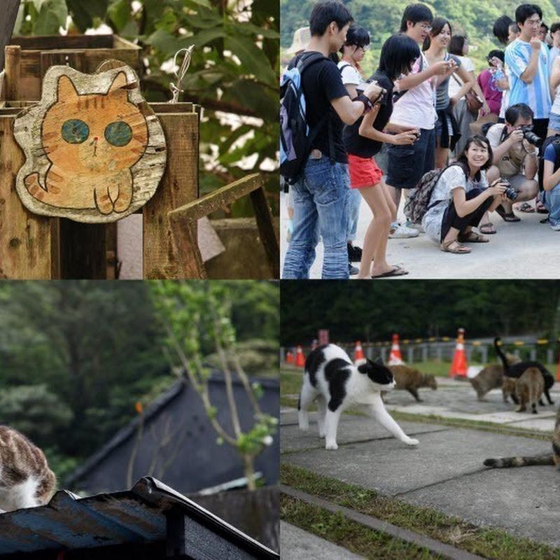 Houtong Cat Village, Taiwan