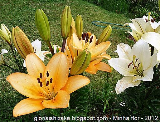 Gloria Ishizaka - minha flor 1