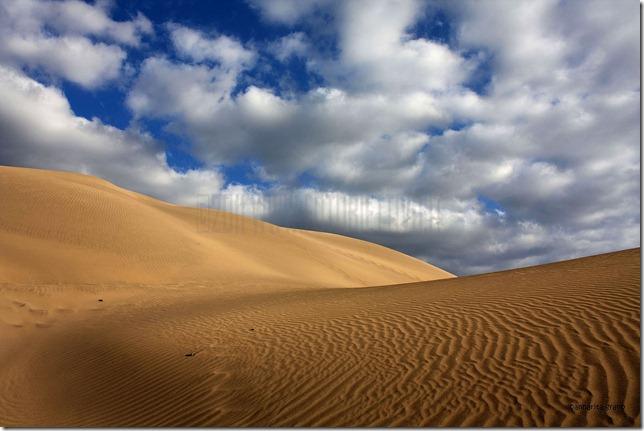 annaritagrano_dune