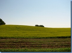 2149 Manitoba Hwy 10 North - canola field
