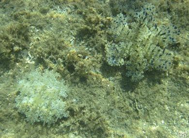 SBL_Unterwasserwelt