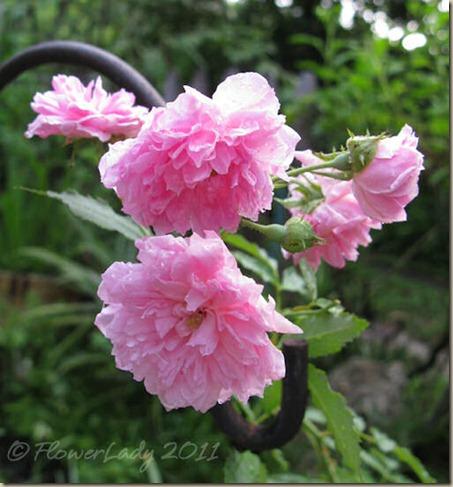 08-08-pink-pet