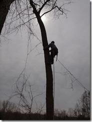 tree fun march 2013 014