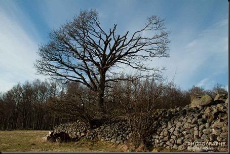 tree_20120408_old