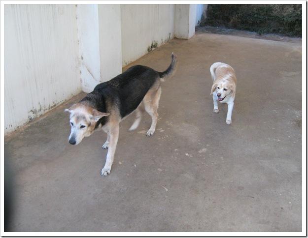 fotos do Nicky e da Luna em 26 de julho de 2011 009