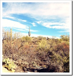 ClearColdTucson
