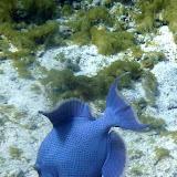 Huge and Blue - Nouema, New Caledonia