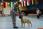 20130510-Bullmastiff-Worldcup-0791.jpg