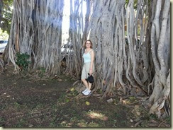 20131010_Banyan Tree near Iolani (Small)