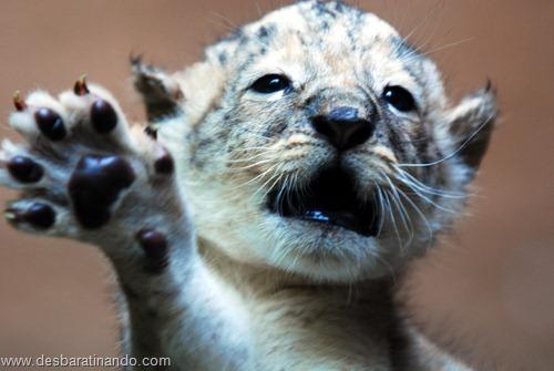 animais recem nascidos filhotes fofos desbaratinando (7)