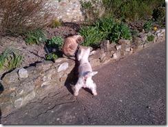 East Devon-20130501-00524