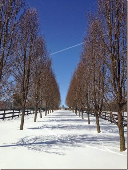 Winter  (37)