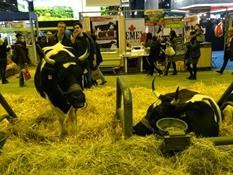2015.02.26-065 vache bretonne pie noire
