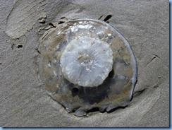 7141 Texas, South Padre Island - Beach access #3 - Jellyfish