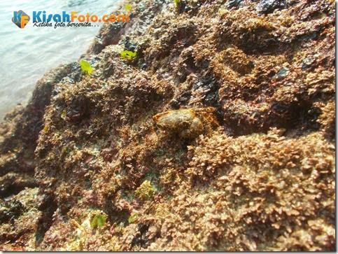 karang pantai watu kodok_05