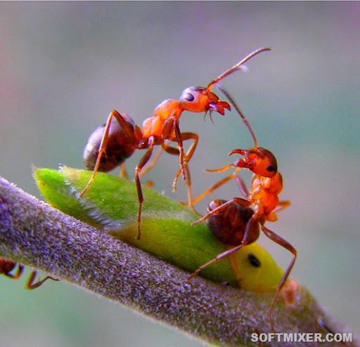 правда ли что муровьиные яйца и кровь лянушки помогает кдалить волосы