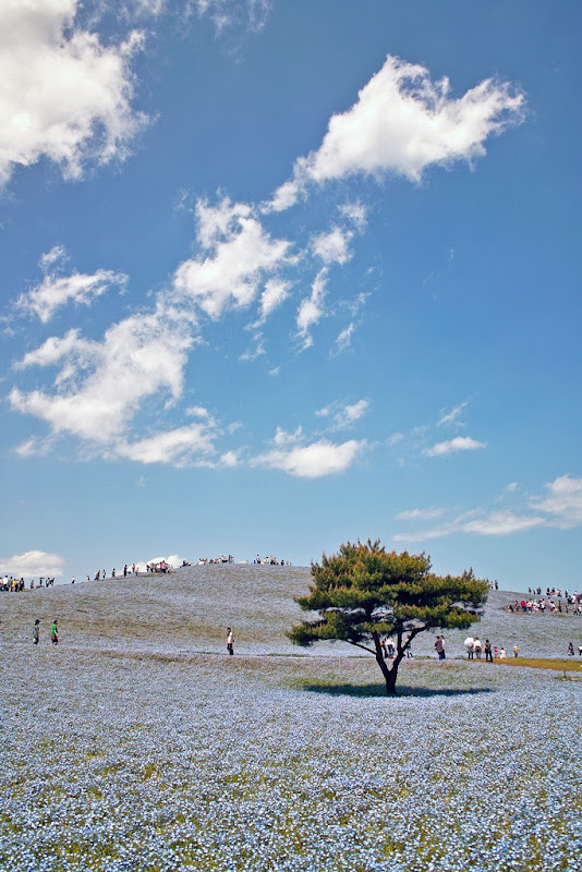 hitachi-seaside-park-13