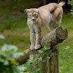 2009_07_09_Thoiry_zoo_010.jpg