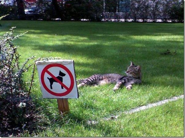 Paraiso felino