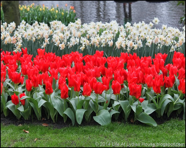 Keukenhof Gardens 19