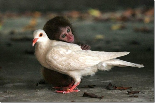 silly-pigeons-birds-20