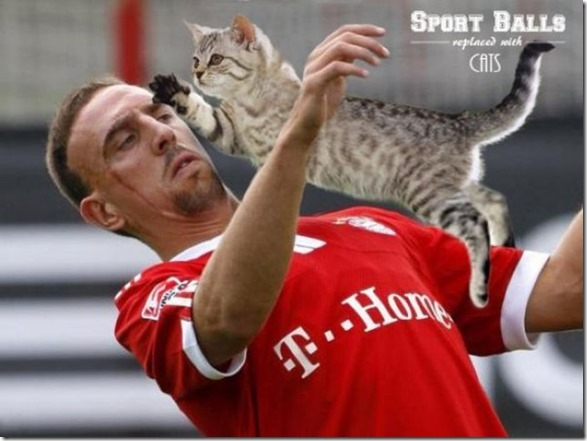 cats-sports-photoshop-13