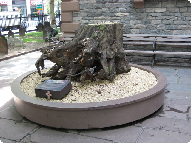 sycamore stump