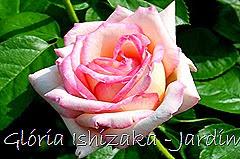 35 - Glória Ishizaka - Rosas do Jardim Botânico Nagai - Osaka