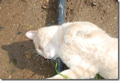gato DSC_052102