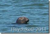 2011-09-13 Cape Cod NP 019