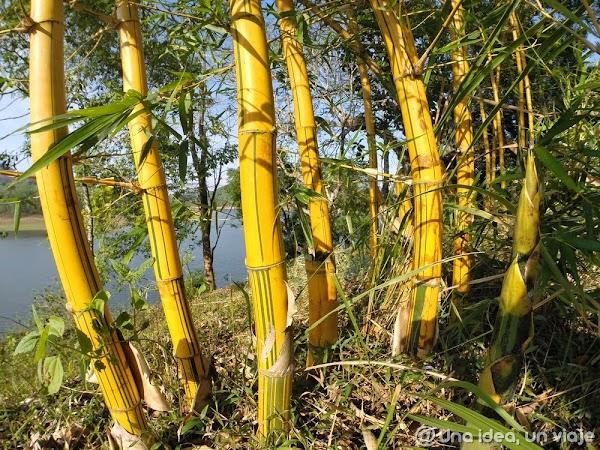 Kerala-Thekkady-Periyar-National-Park-unaideaunviaje.com-KeralaBlogExpress-17.jpg